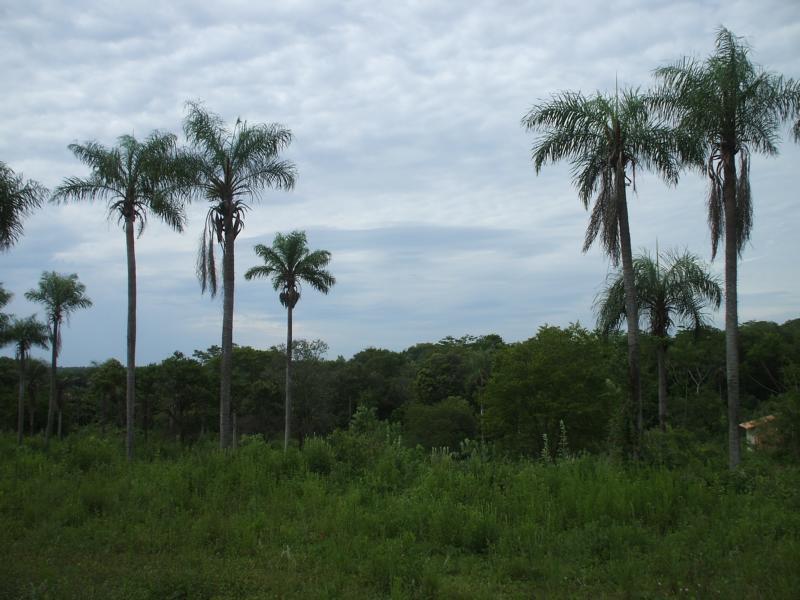 paisaje-de-campo-paraguayo